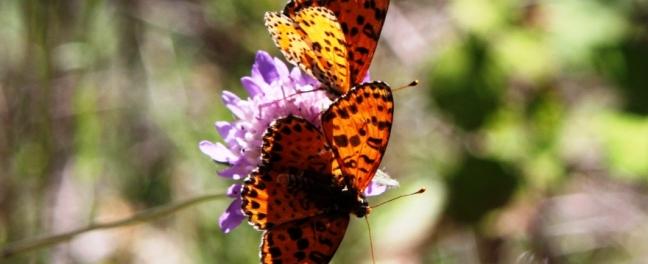 Butterflies Cazorla Natural Park Www.andrewforbes.com