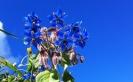 Casarabonela Flowers