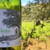 La Melonera Ronda Winery Andalucia Diary 3