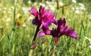 Orchids Cortijo De Las Nieves Cropped