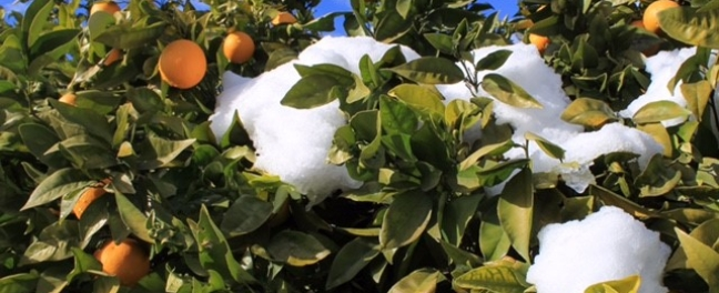 Snow Andalucia Diary Andrew Forbes 1
