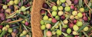 #AndrewForbes, #Gourmet #EVOO #belvisdelasnavas #belvisoil #belvisoliveoil #marbellaclubh