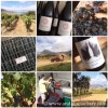 Andrew Forbes visits Samsara Wines