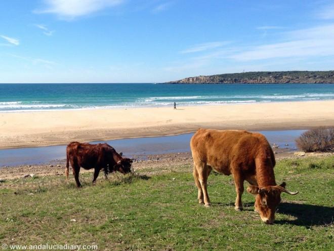 Andalucia Atlantic Coast Tarifa Andrew Forbes (2)