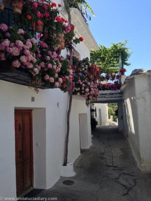 Capileira Las Alpujarras (15)