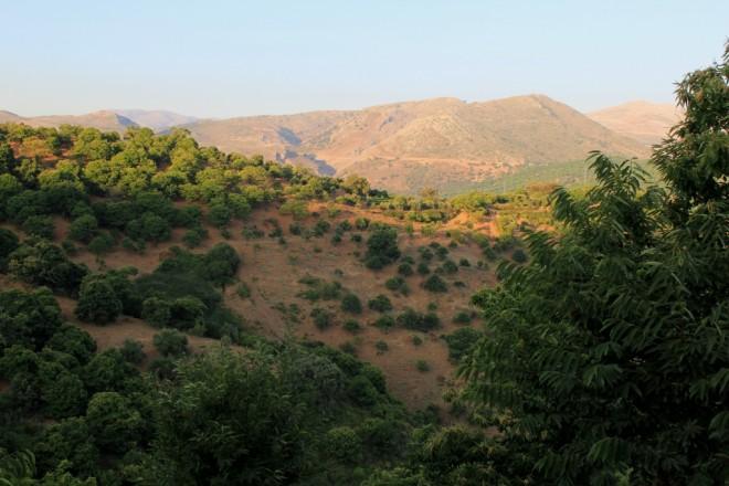Chestnut woodlands surrounding Cartajima, near Ronda, Andalusia