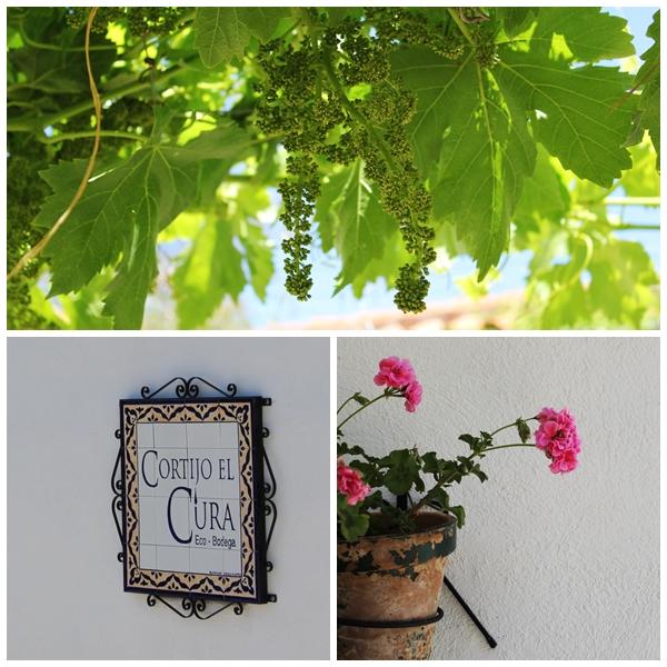 Cortijo el Curo Organic Winery Laujar