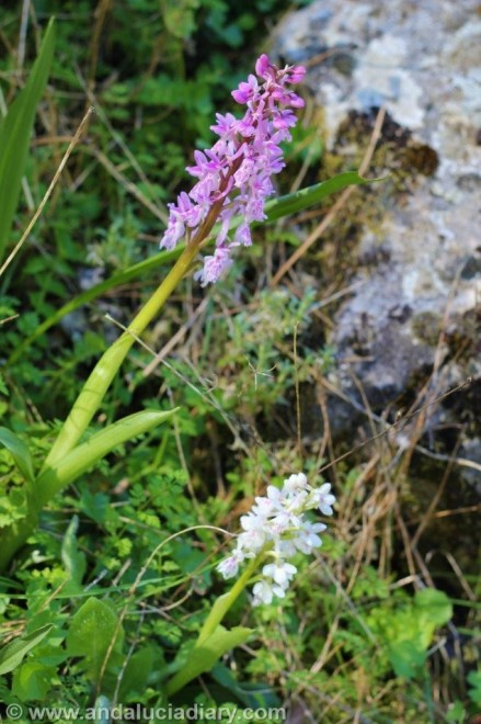 Grazalema natural Park Andalucia Diary (14)