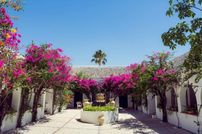 Hacienda de San Rafael Andrew Forbes Andalucia Diary (11)