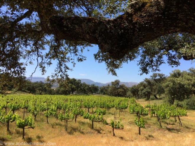 La Melonera Ronda Winery Andalucia Diary (1)