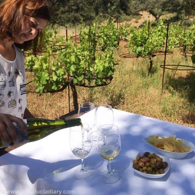 La Melonera Ronda Winery Andalucia Diary (12)