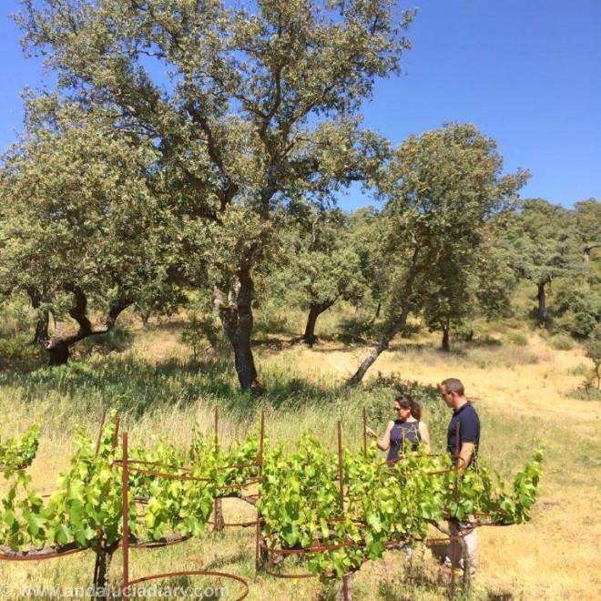 La Melonera Ronda Winery Andalucia Diary (8)