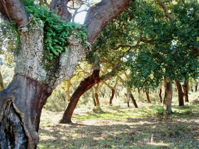 Los Alcornocales Natural Park Andalucia Diary