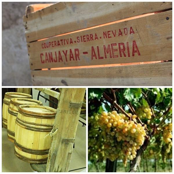 Museo de la Uva de Barco, Terque, Almeria
