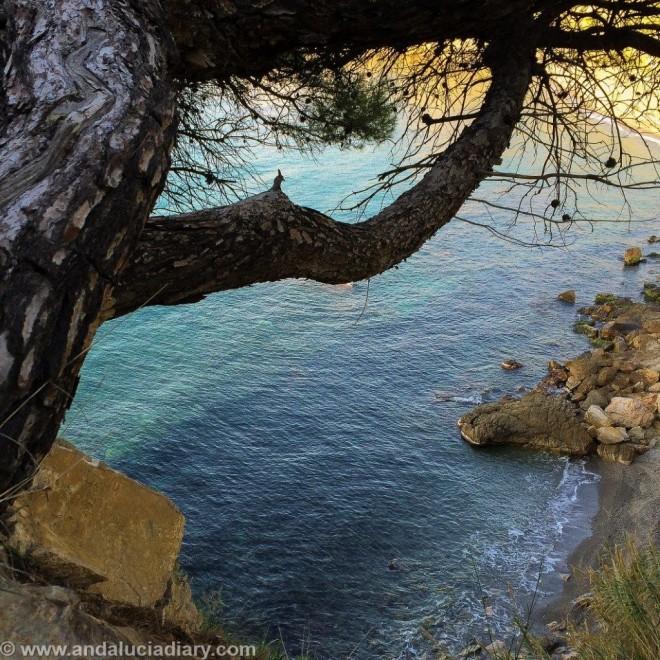 Pareja Natural Acantilados de Maro - Cerro Gordo (8)