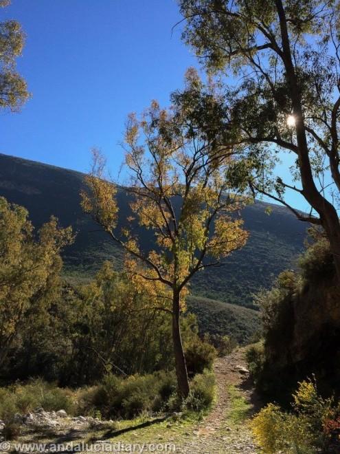 Pareja Natural Acantilados de Maro - Cerro Gordo (9)