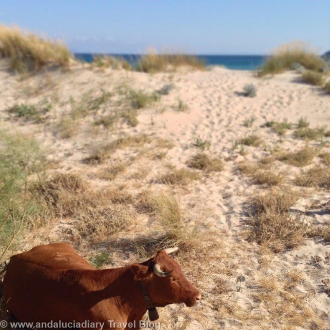 Sirocco Beach Bar Chiringuito Bolonia Andrew Forbes Andalucia Diary (11)