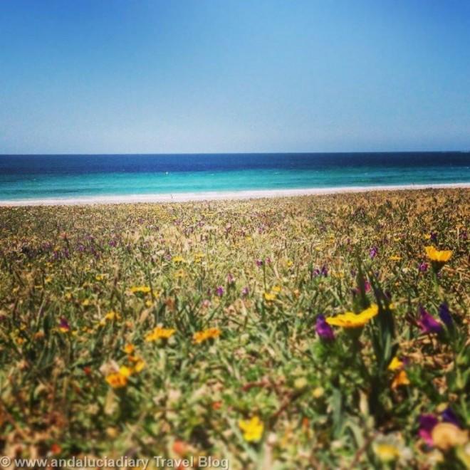 Sirocco Beach Bar Chiringuito Bolonia Andrew Forbes Andalucia Diary (9)
