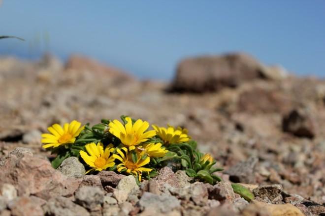 Yellow Sea Astor, Cabo de Gata