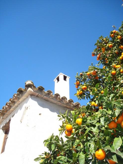 castellar_de_la_frontera_orange trees andalucia diary