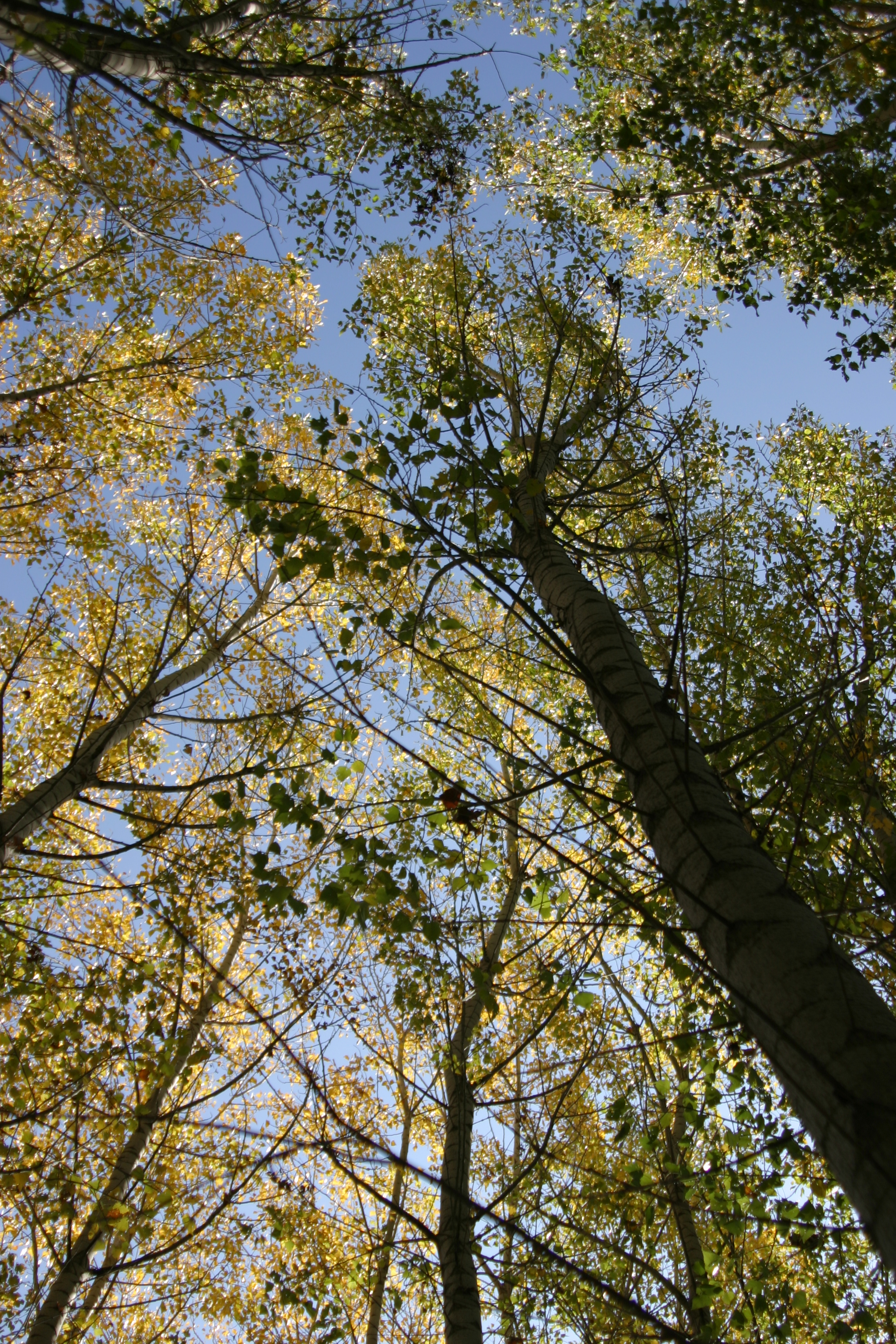 Autumn in alhama, Granada www.andrewforbes.com