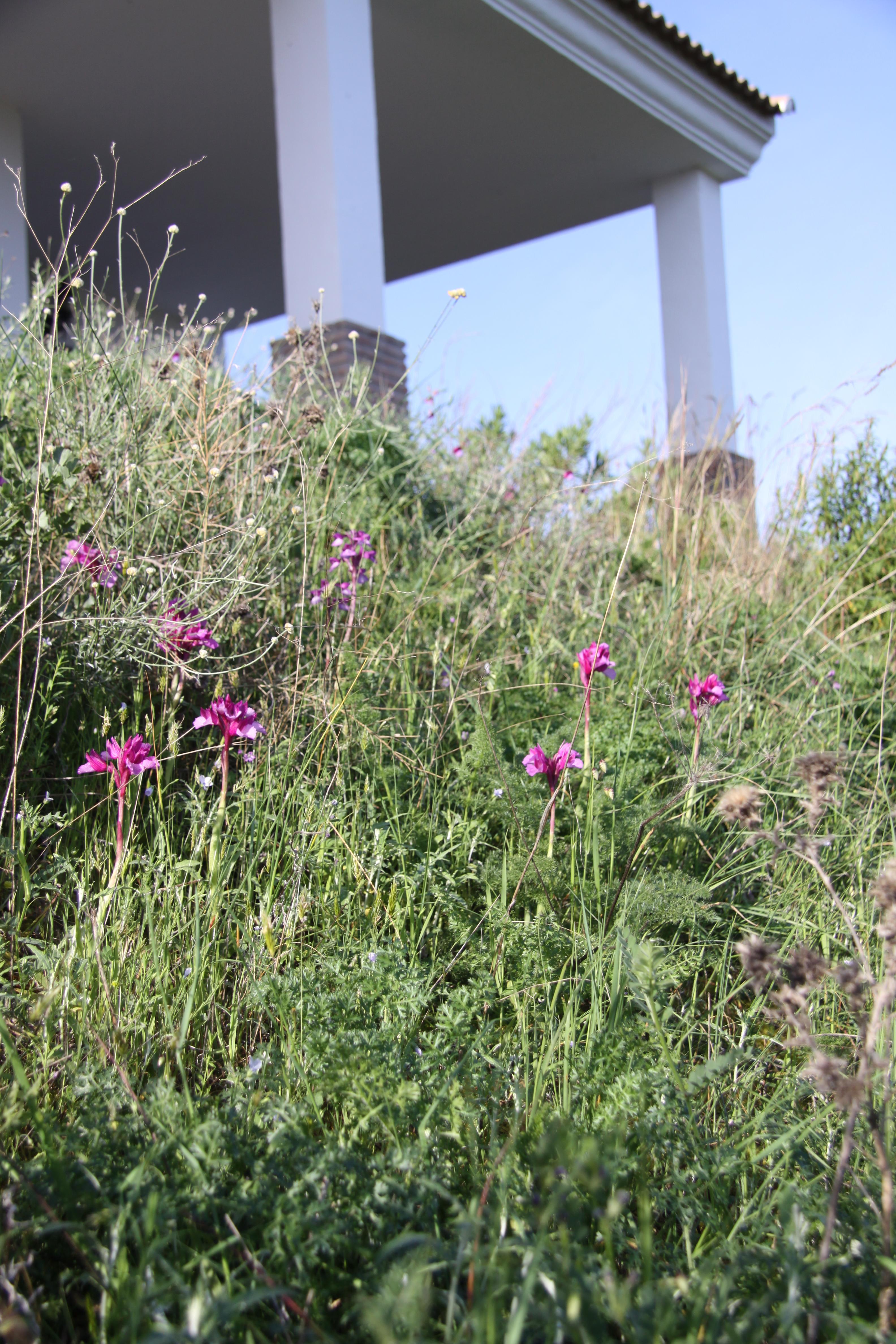 Orchids at Cortijo de las Nieves www.cortijo-nieves.com