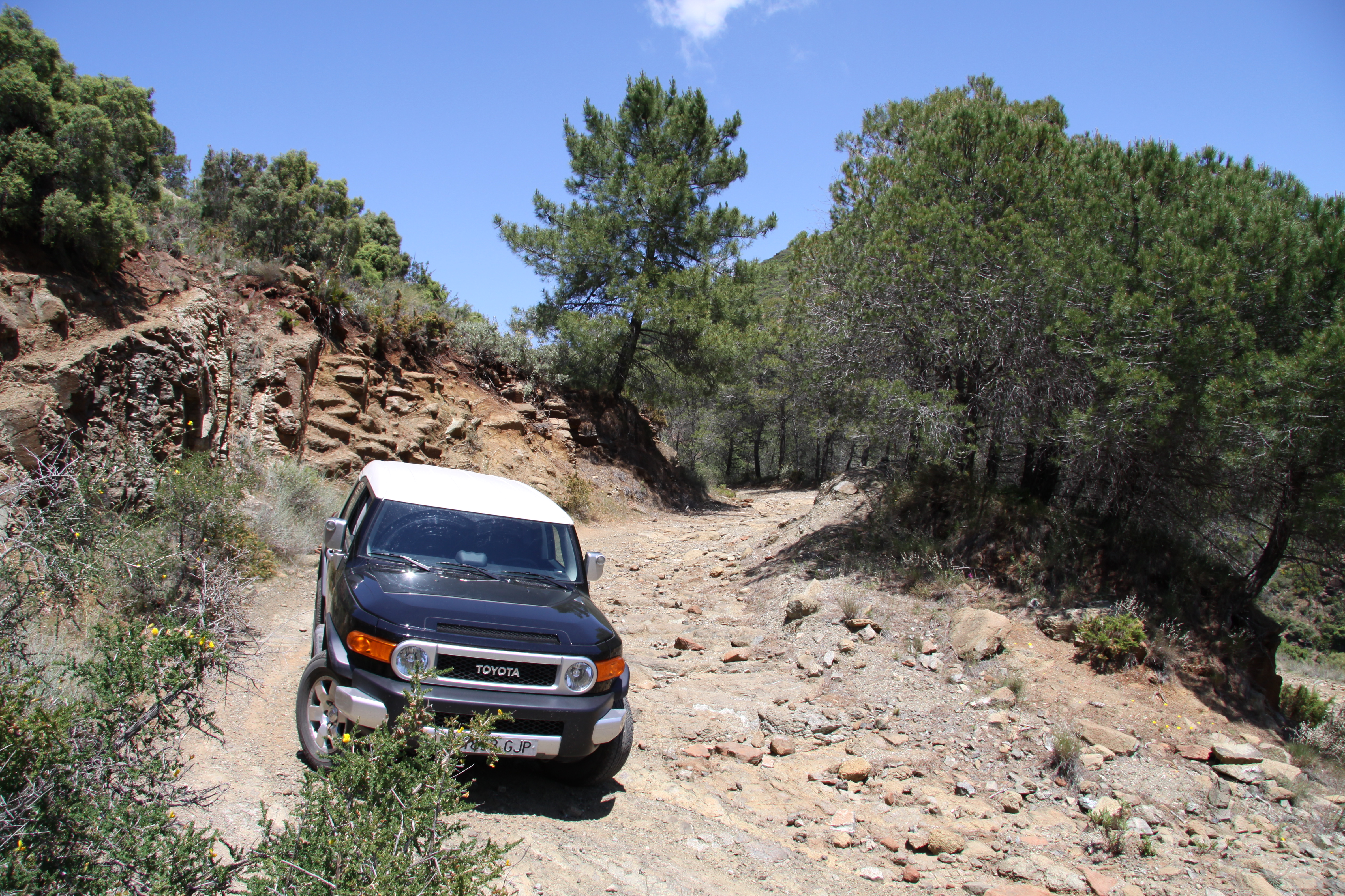 Exploring trails, La Mairena, Ojen, Andalucia