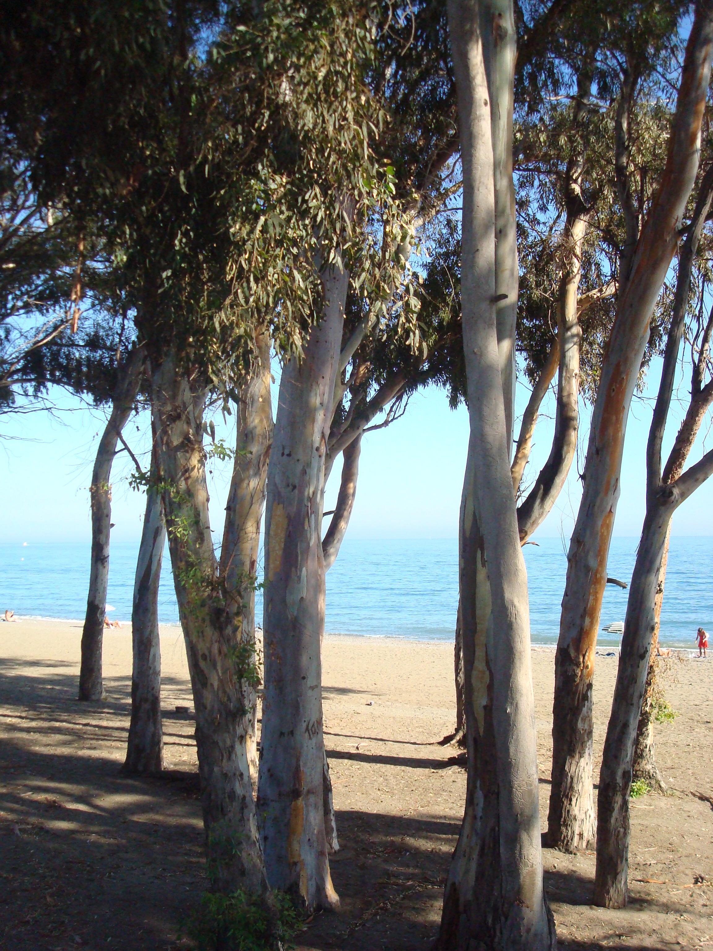 San pedro beach, malaga province andrew forbes (1)