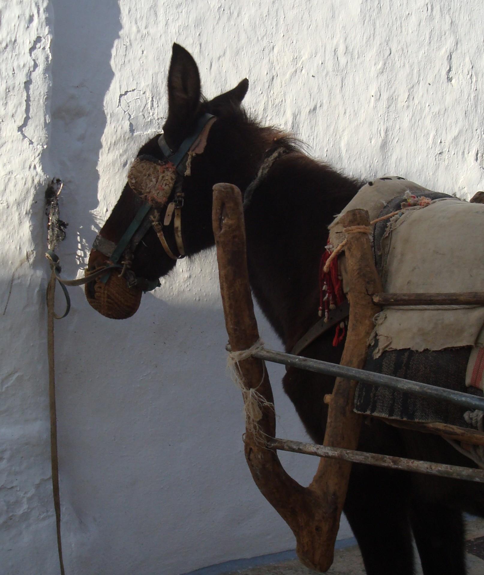 Horse in Cartajima street