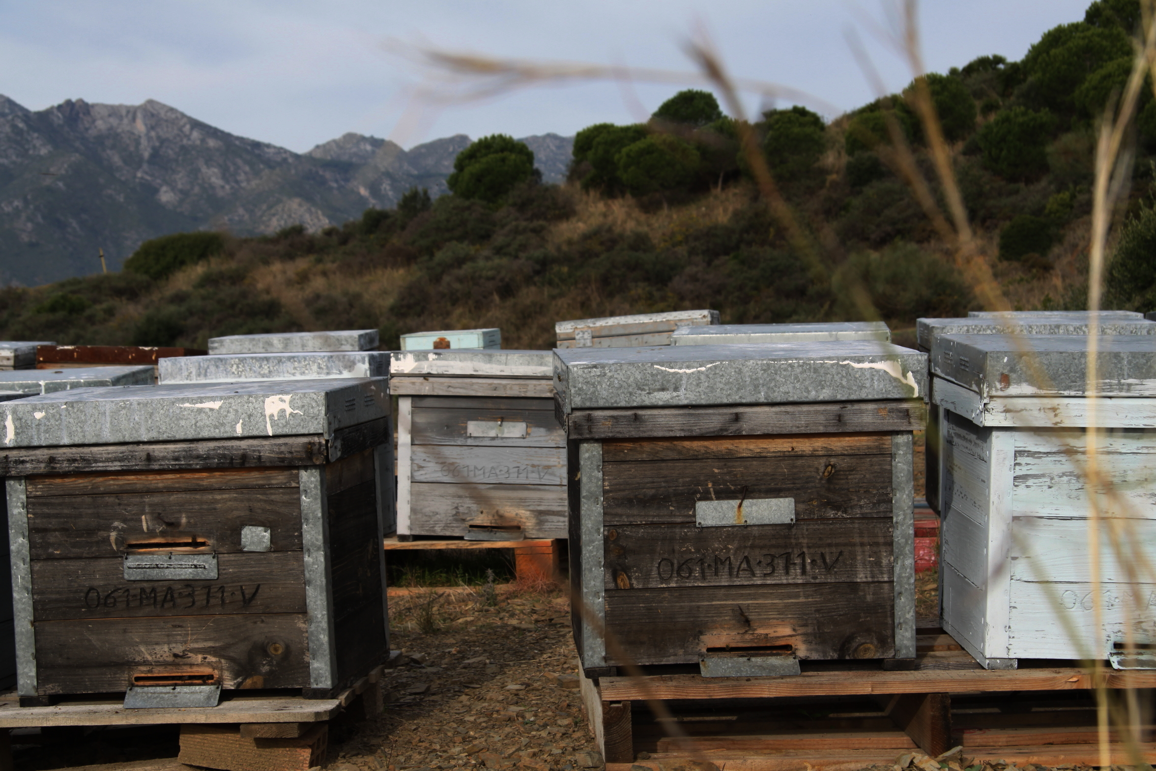 Beekeeping_in_andalucia_andrew_forbes