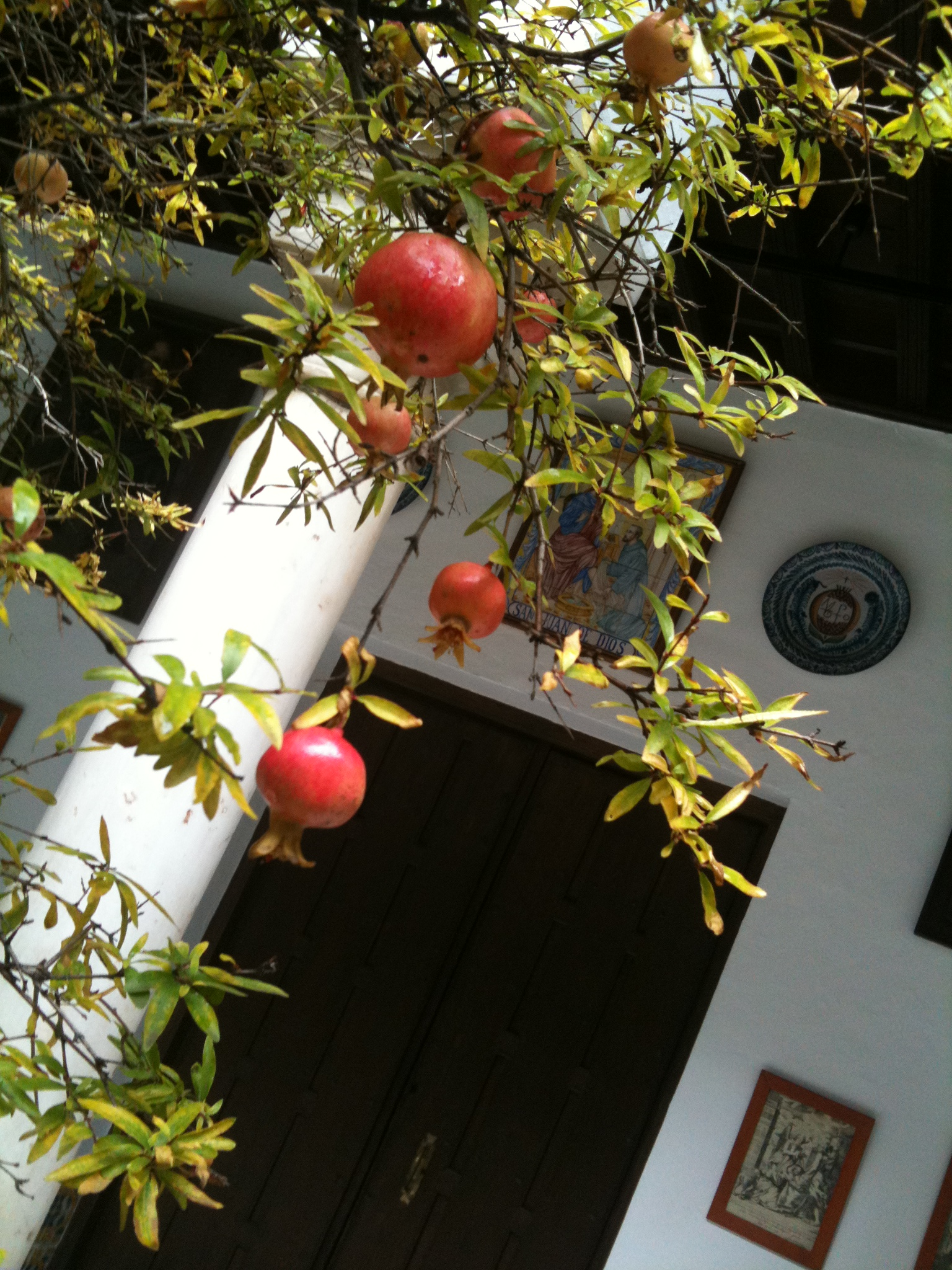 Pomegranates in Granada - andrew forbes