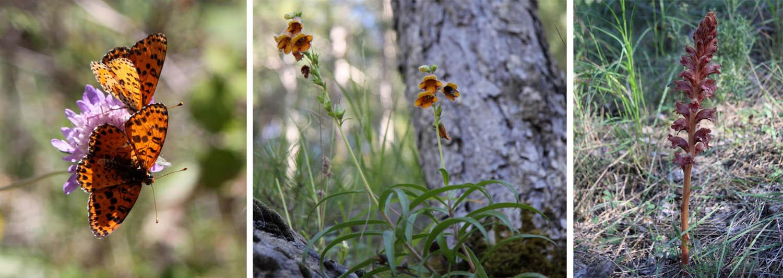 Butterflies_Cazorla_Natural_Park_andrewforbes.com