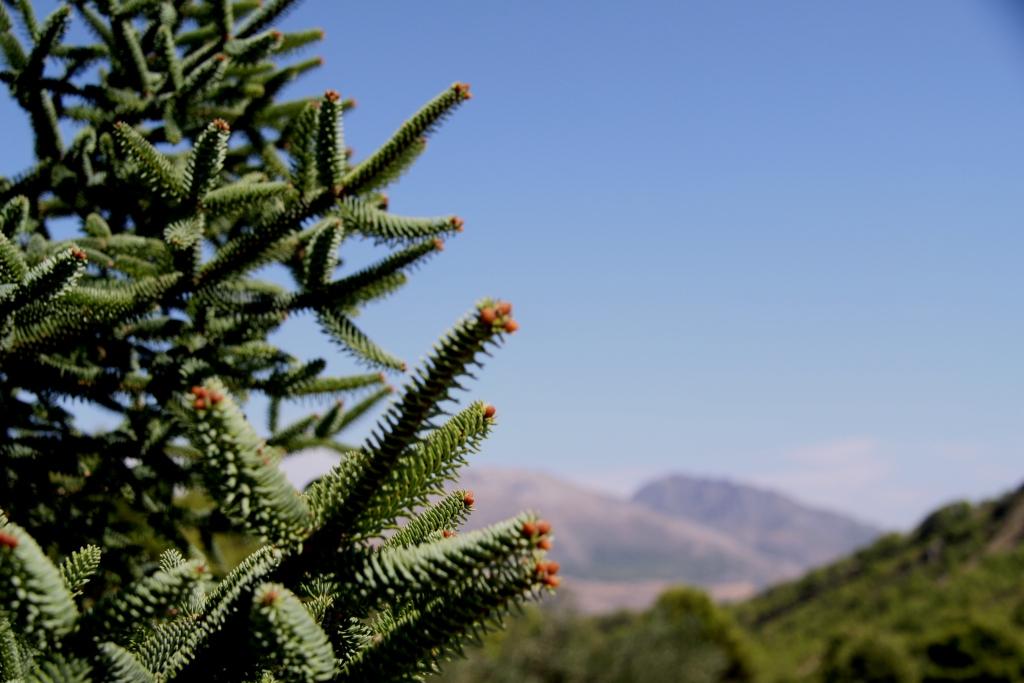 Sierra_de_las_nieves_natural_park_yunquera_hiking_senderismo_rutas_andrew_forbes_pinsapo