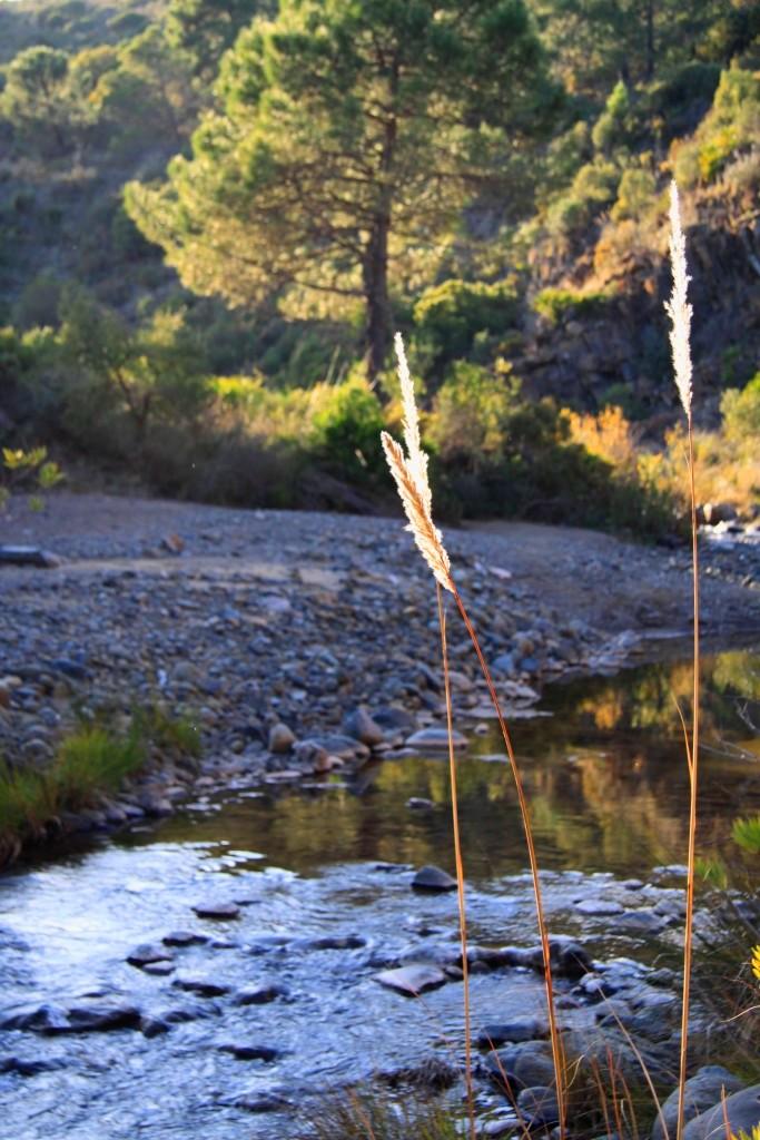 River_la_mairena_web