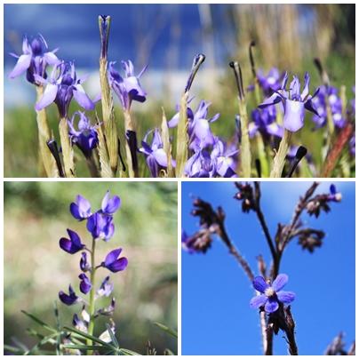 Wild flowers sierra de las nieves