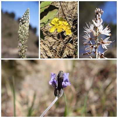 Spring_march_flowers_montes_de_malaga_natural_park