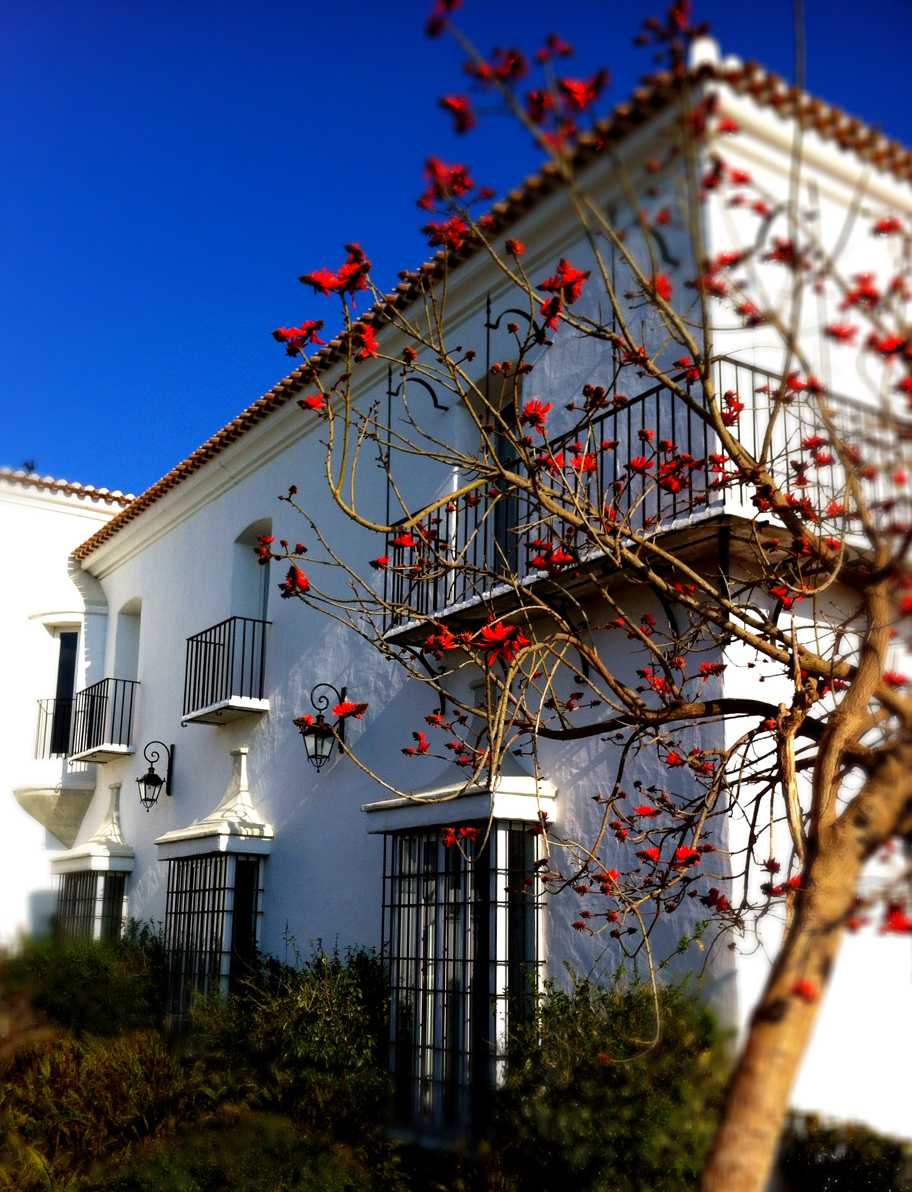 Flame Tree Cortijo Bravo