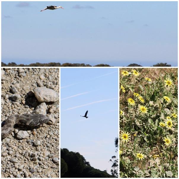 La Doñana Wildlife