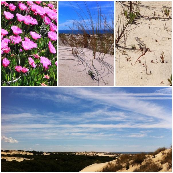 Las Dunas the dunes La Doñana