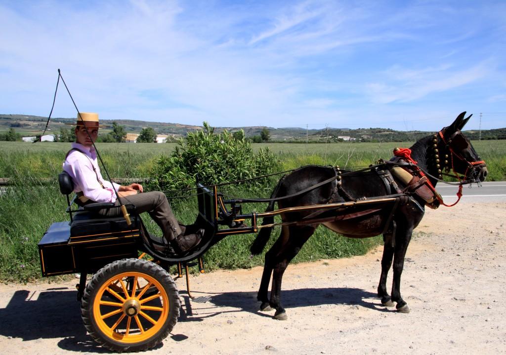 HORSE AND BUGGY ROMERIA DE SAN ISIDRO SENTENIL, RONDA, ANDALUCIA