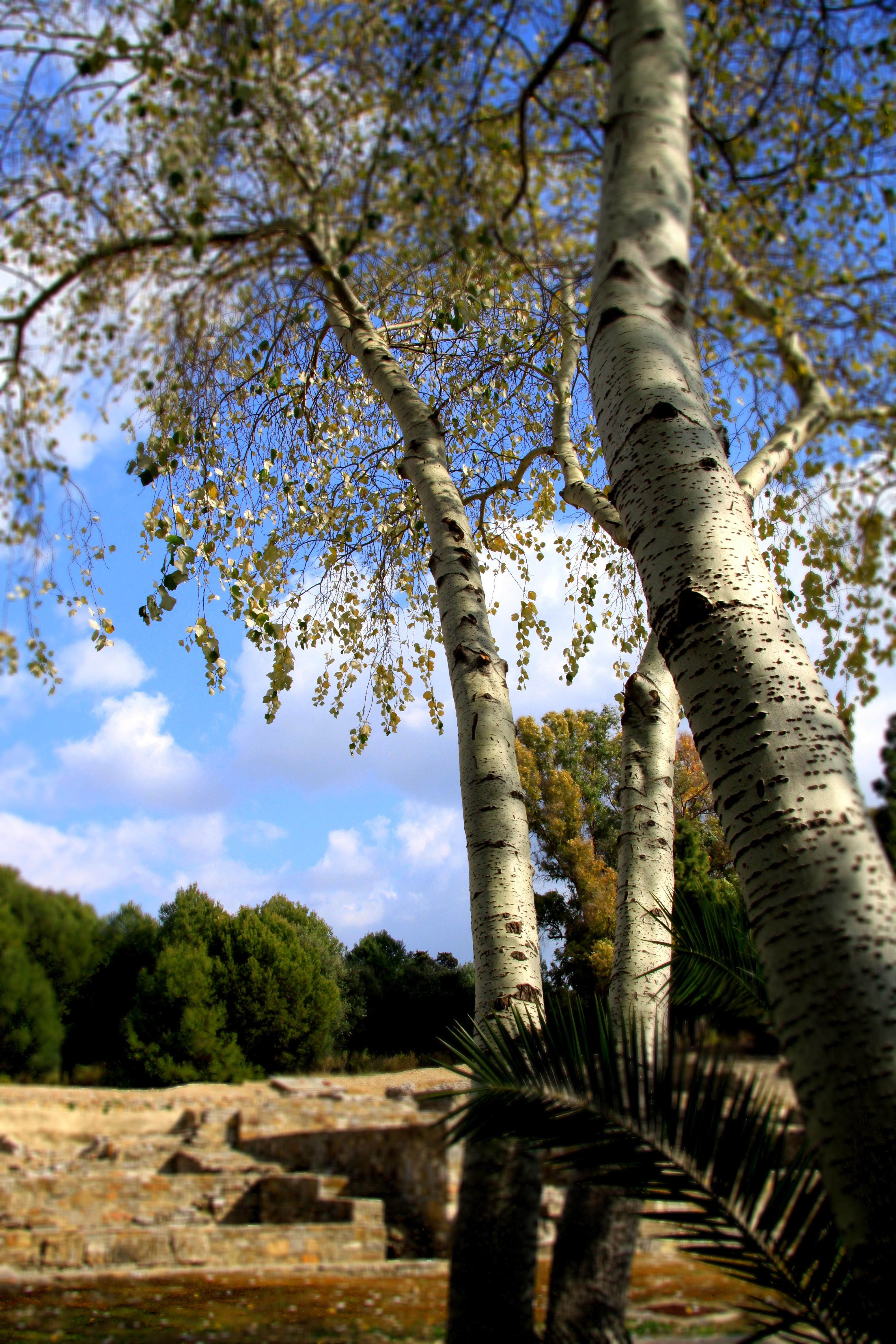 San Roque Carteia Roman City Cadiz Province
