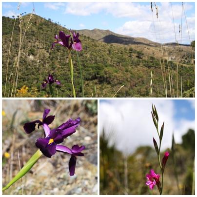 Flora La Mairena