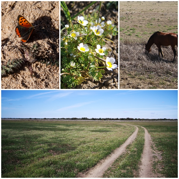 La Doñana national park wetlands dried up after driest winter in 70 years