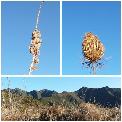 Summer seed heads La Mairena to Entrerios Andrew Forbes