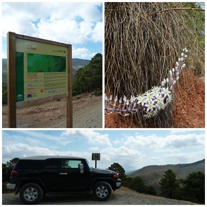 Sendero 'La Rejia' near Tolox, Sierra de las Nieves Natural Park