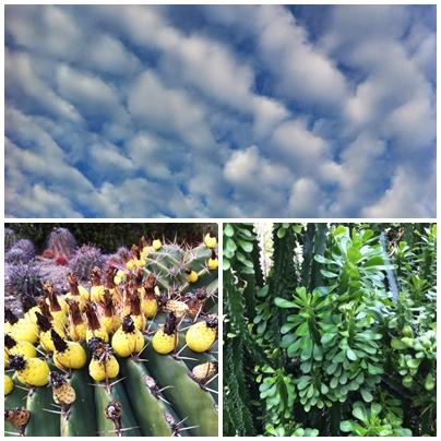 Cactus succulents garden Sierra de las Nieves casarabonela