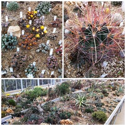 Cactus succulents garden Sierra de las Nieves Andrew Forbes