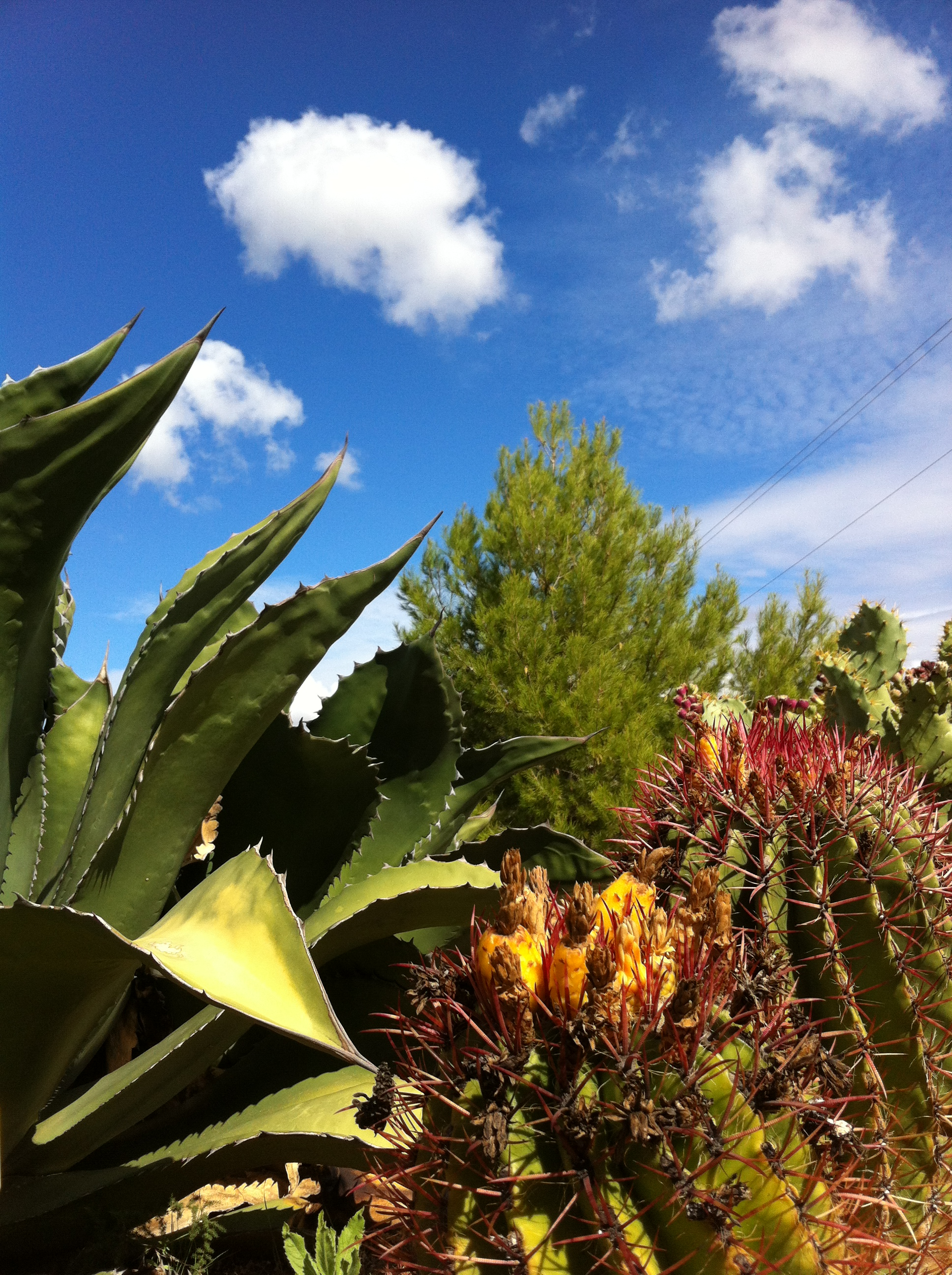 Www.andrewforbes.com Cactus Botanic Garden