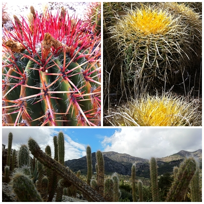 Botanical Garden of Cactus and Succulents near Casarabonela, Sierra de las Nieves Andrew Forbes