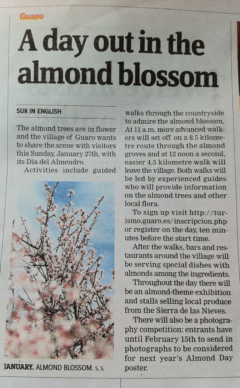Www.surinenglish.com Guaro Almond Blossom Festival